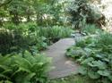 Wood_bridge_ferns_small_2