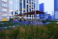 Green_roofs_900_michigan_small