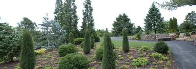 Dwarf_conifer_garden_2_small_7