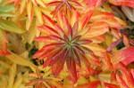 Ejessie_autumnm_1
