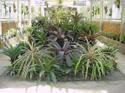 Rio_botanical_garden